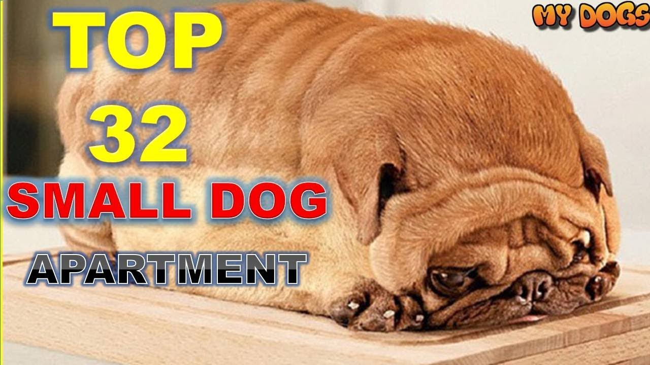 Top 32 Small Dog Breeds For Apartments Hd