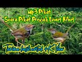 Suara Pikat Burung Prenjak Lumut Ribut  Mp3 - Mp4 Download