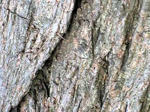 Eco rimedi contro gli insetti le formiche in casa doovi for Pidocchi rose bicarbonato