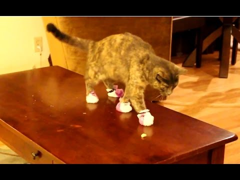 'Cats Wearing Socks Compilation' || CFS
