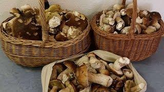 Германия: СУМАСШЕСТВИЕ 1700 евро штраф, за собирание грибов в лесу