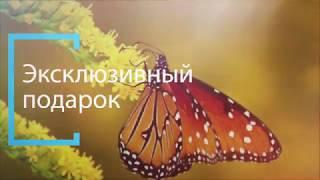 Тропические живые бабочки. Заказать эксклюзивный подарок. Живая бабочка купить. Украина  Днепр.