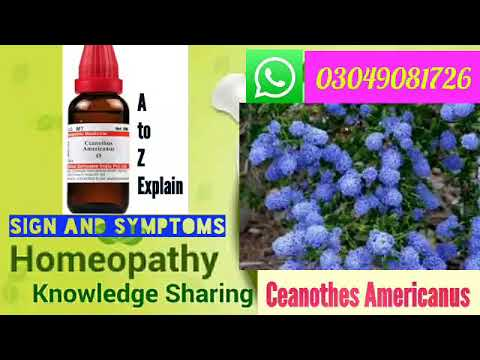Ceanothes Americanus | Homeopathic medicine sign and symptoms