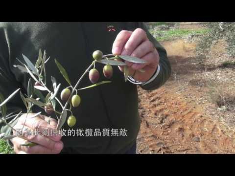 橄欖變色期 Envero