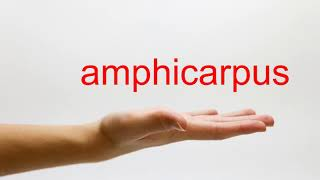 How to Pronounce amphicarpus - American English