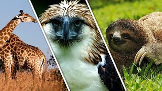 List Of Animal Superlatives That You won't Believe Exist