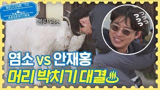 불량염소vs안재홍(An Jae-hong) ♨머리 박치기 대결♨ 승자는? 트래블러 아르헨티나(travelera…