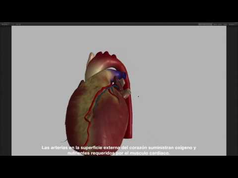 Stanford Anatomy Tours Demo