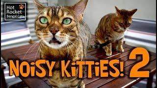 Bengal cats meowing, chirping, yowling - NOISY KITTIES 2!