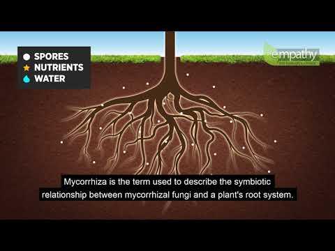Mycorrhizal Fungi Animation
