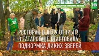 Ресторан в лесу открыт! В Татарстане стартовала подкормка диких зверей   ТНВ