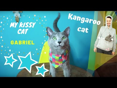 MY RUSSIAN BLUE CAT - Gabriel a funny kangaroo-cat