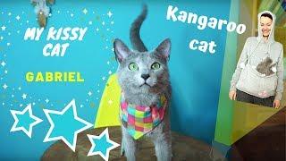 MY RUSSIAN BLUE CAT  Gabriel a funny kangaroocat