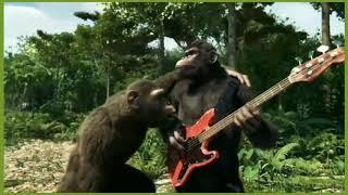 Dancing Monkey 'Mata Indah Bola Ping Pong' Reggae Cover.