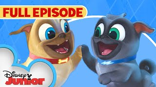 Hawaii PugOh  / A.R.F.  | Full Episode | Puppy Dog Pals | Disney Junior