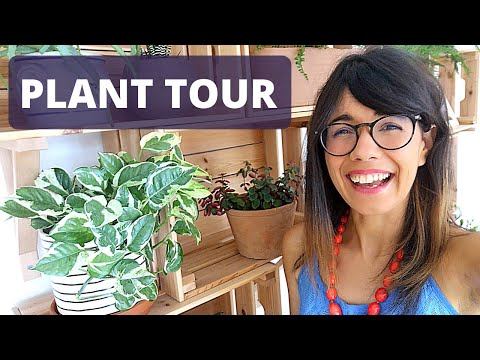 plant-tour-summer-2020-|-my-houseplant-collection-2020-!