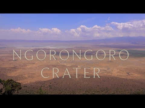 Ngorongoro Crater and Serengeti, Wildlife