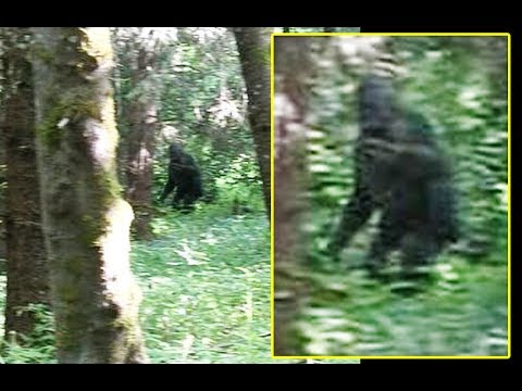 Discovering Bigfoot Is a Bigfoot Documentary Made by a