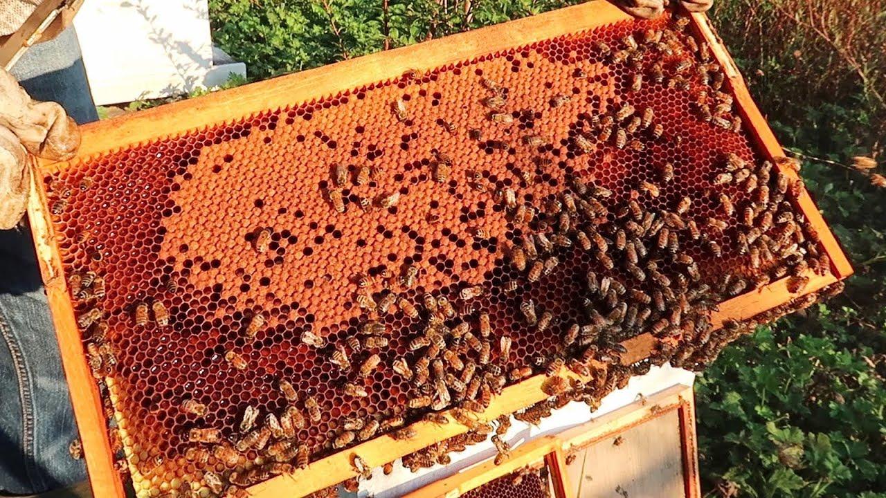 Should I Feed My Bees Sugar Water