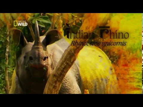 Thumbnail: Documentario Animal - Vida Selvagem.(2016)