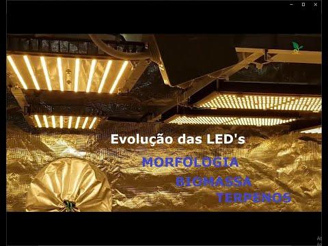 Desmistificando a FOTOBIOLOGIA na Iluminação para Cultivo Indoor (LUMENS, FOTONS, PPFD, Etc.)