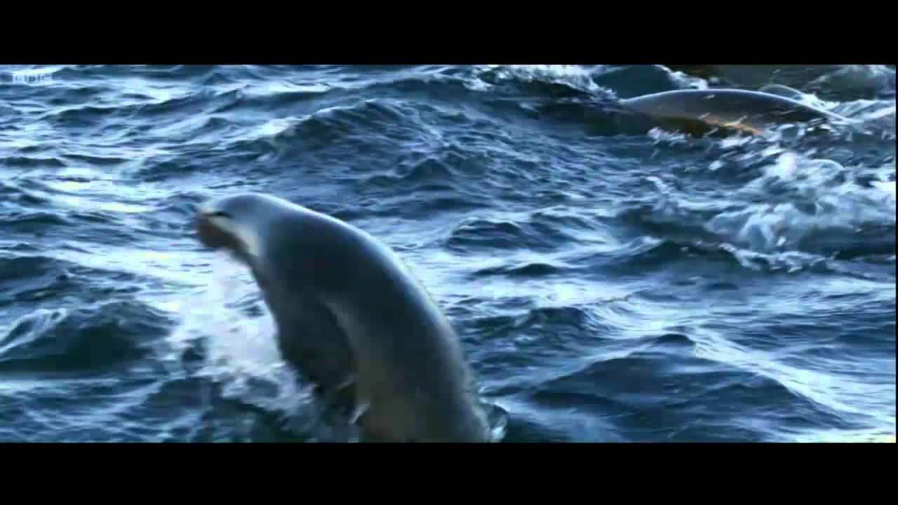 Robert na randce ze zbiornikiem rekina