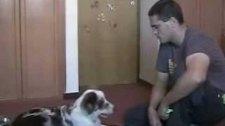 Кликер-дрессировка собак: 2)Кличка