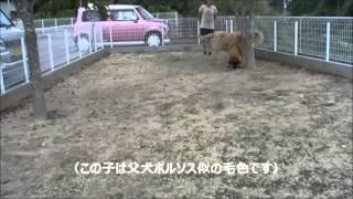 大型犬の情報はこちらから http://www.masaki-collection.jp/