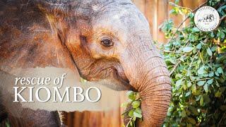 Kiombo's Rescue