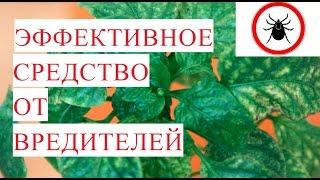 видео Вредители комнатных растений и меры борьбы с ними, фото