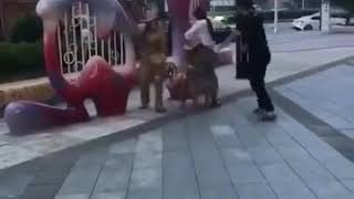Most Funny Japanese Videos
