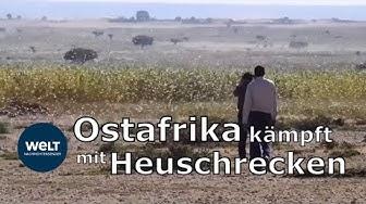 BIBLISCHE PLAGE: Heuschrecken-Invasion bedroht Ostafrika mit Hungersnot