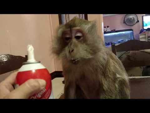 My Monkey Likes Her Reddi Wip By The MOUTHFUL