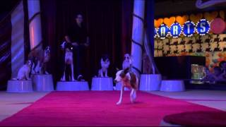 What Color Is Your Dog? Episode 226 - Jr Johns - Training Back Flips