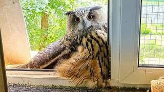 Our owl has melted! Bring a refrigerator, urgently!