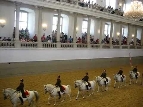 The Lipizzans of