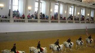 The Lipizzans of Vienna