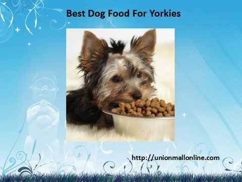 Best Dog Food For Yorkies Youtube