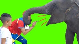 عمو صابر وصغير الفيل -amo saber feeding the elephant cub
