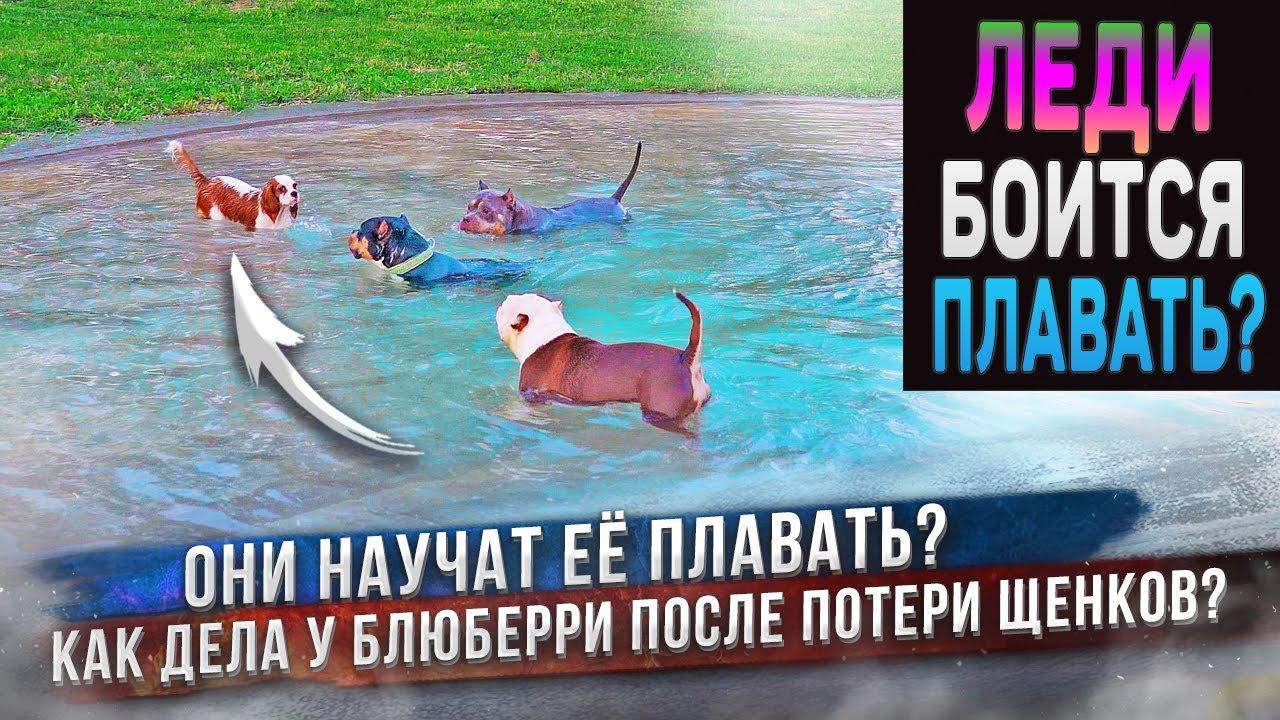 Когда Леди научится плавать? Что с Блюберри, которая потеряла щенков?
