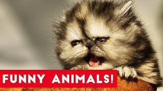 Funniest Pets of the Week Compilation July 2017 | Funny Pet Videos