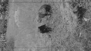 Суровые коты в Рудном