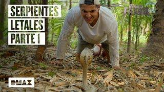 Asi es el encuentro de Wild Frank con las serpientes mas peligrosas del planeta (Parte I)