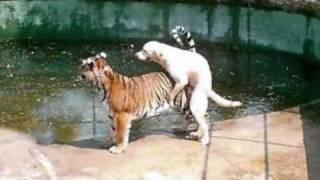 śmieszne zwierzęta.