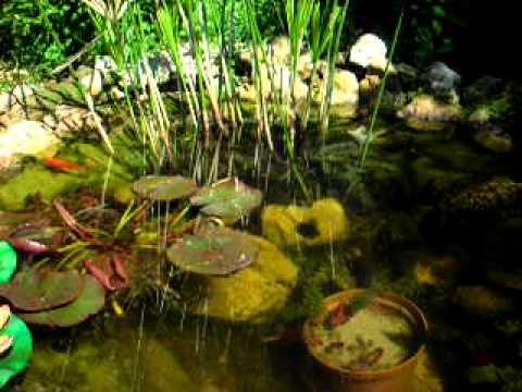 Cascate e laghetto giardino 2011 youtube for Storione laghetto giardino