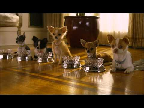 Un Chihuahua de Beverly Hills 2 - Tráiler - Disney DVD y Blu Ray streaming vf