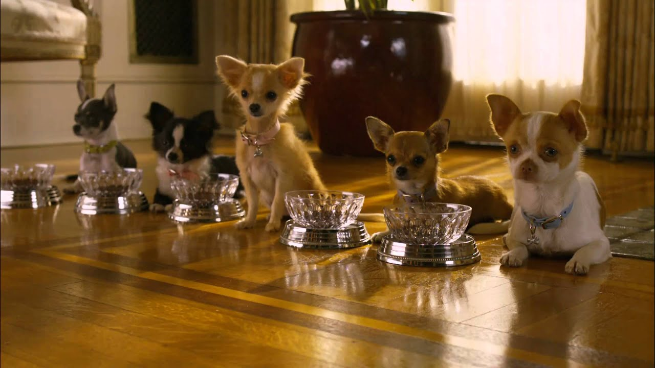 beverly chihuahua un chihuahua de beverly hills 2 tr 225 iler disney dvd y 9073