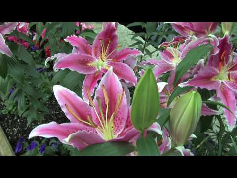 Exploring the Beauty of Nature - Exotic Flowers and Plants in HD
