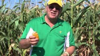 Chapter 1: What's in that field? Sweet Corn vs. Field Corn