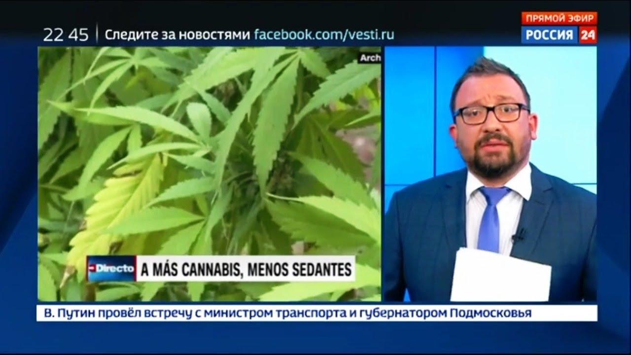 Конопля священное растение польза и вред курения конопли